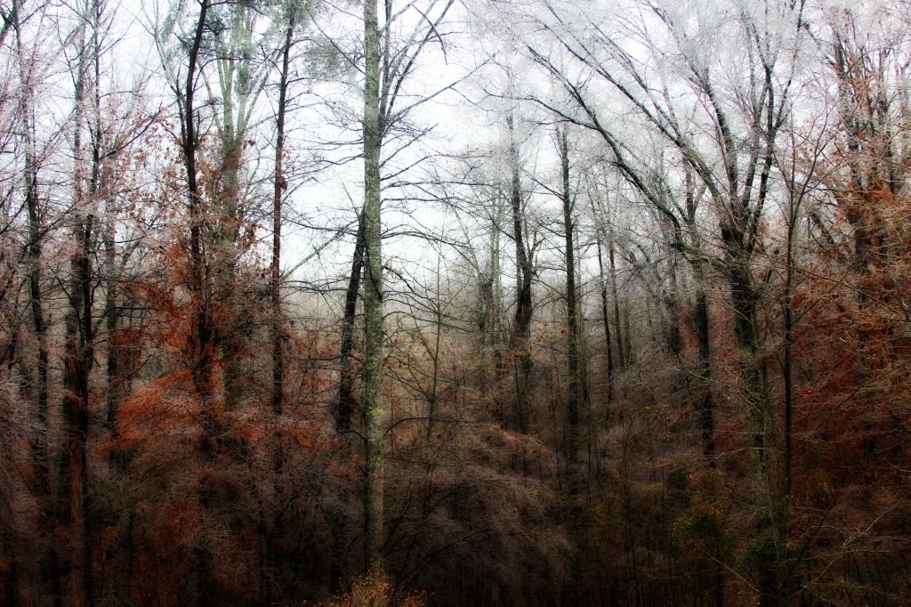 Icy Woods